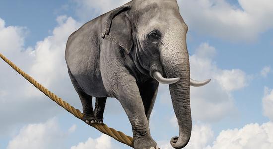 Preview elefant auf hochseil freshideafotolia 47639359 s