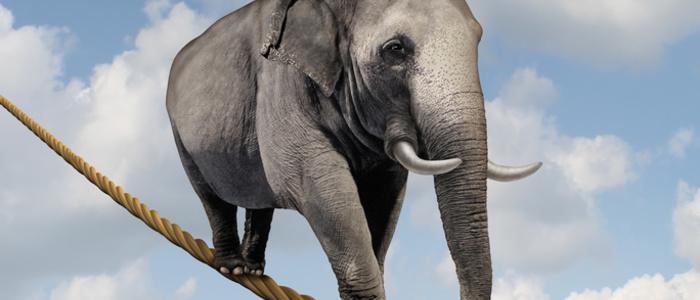Regular elefant auf hochseil freshideafotolia 47639359 s